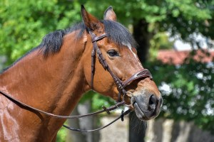 16 Common Types of Horse Bits (A Helpful Illustrated Guide)