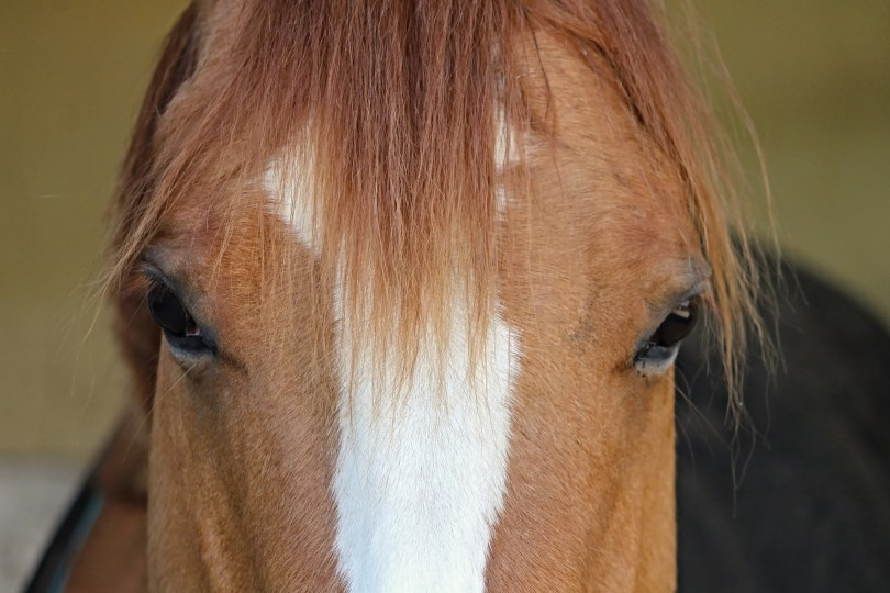 How Much Horses Cost & How You Can Actually Afford One