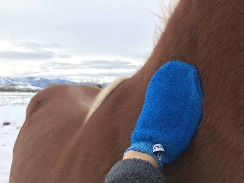 horse grooming mitt