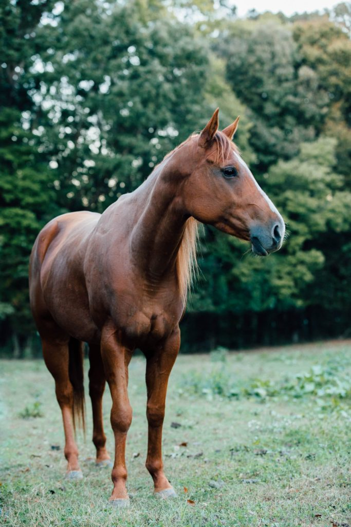 horse photography background