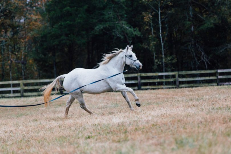 horse photography editing before
