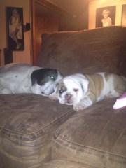 Ozzy & Petunia Relaxing