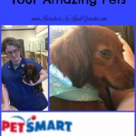 Spring Cleaning For Your Amazing Pets #PetSmartGrooming