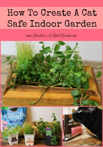 How To Create A Cat Safe Indoor Garden