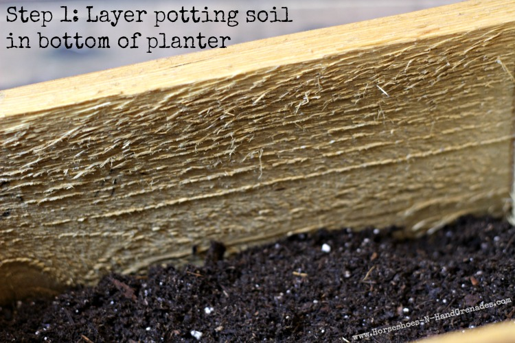 Step 1 Potting Soil