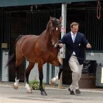Jamaica, the 2008 USEF Farnam Platform Horse of the Year, spent his year as an ambassador for the United States Equestrian Federation.