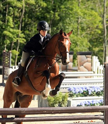 Great Southwest Autumn Classic Horses In The South A