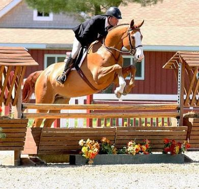 David Oliynyk Takes Home Performance Working Hunter Championships at the Fieldstone Spring Festival