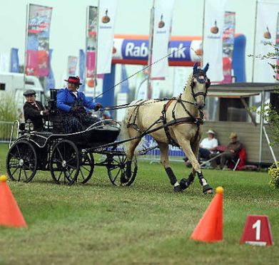 United States Driving for the Disabled, Inc. Presents Free Para-Equestrian Developing Driver Clinic