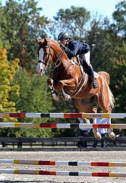 Tracy Fenney Dominates Final Week at HITS Culpeper