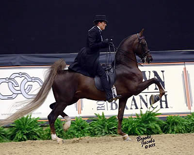 Melinda Moore Makes It a Double in American Saddlebred Division at Alltech National Horse Show