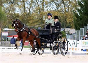 US Stands Sixth after Dressage at 2013 FEI Pony World Driving Championships