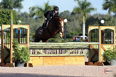 Winter Equestrian Festival | Horses in the South – A Horse