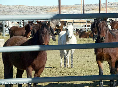 On the Road for Wild Horses in Wyoming and Utah