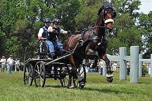 Strong Field Lines Up for USEF National Single Horse Driving Championship at Southern Pines CDE