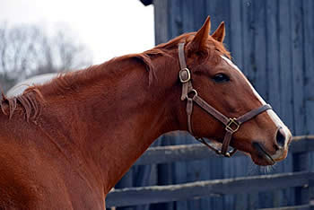 Old Friends and New Vocations Partner for Retired Horses