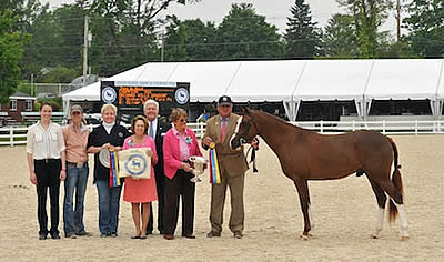 2014 Devon Horse Show & Country Fair Hosts First Day of Competition