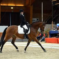 Rebecca Hart and Schroeters Romani competing in the CPEDI3* in Moorsele, Belgium