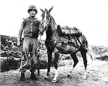 Military Horses Saluted as Humanitarians of Horse Stars Hall of Fame