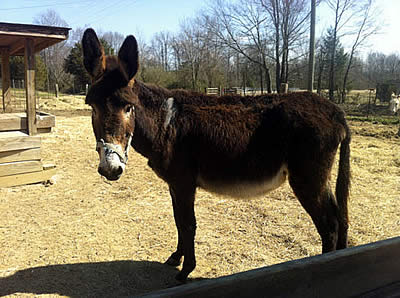 Horses and Donkeys Need You Now