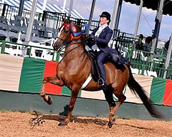 Bevins Takes Top Honors in 2014 USEF Saddle Seat Adult Amateur Medal Final