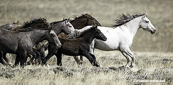 Court Grants Wild Horse Advocates Right to Intervene in Wyoming Anti-Mustang Lawsuit