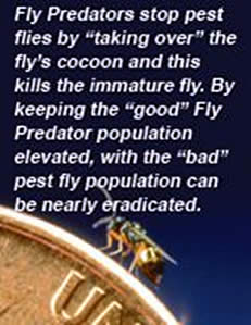 Spalding Fly Predators and Fly Control