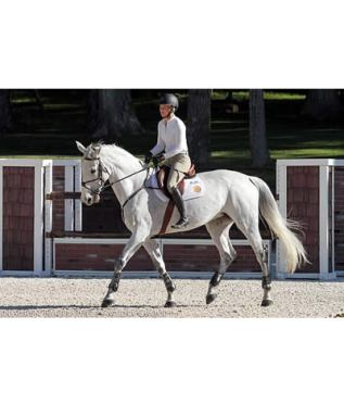 """Riders Ditch Stirrups on Day Five of George H. Morris """"Gladstone Program"""""""