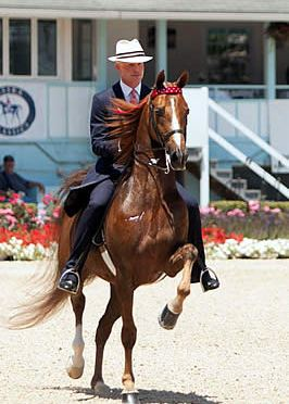High Stepping American Saddlebreds Return as the Tradition Continues in Devon