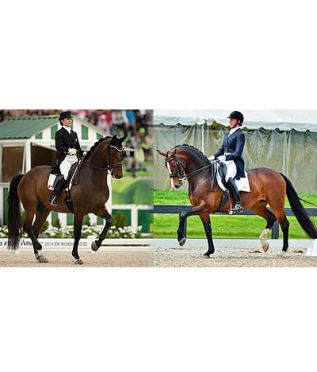 All Four Riders on Canada's Pan Am Dressage Team Are C-DAAP Recipients