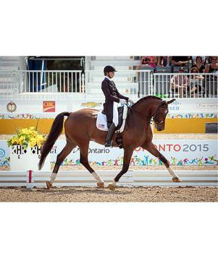 Premier Equestrian Congratulates Team USA on Bringing Home Gold at Pan American Games