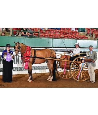 Urban Legend+++// Is Champion at 2015 Arabian Sport Horse Nationals