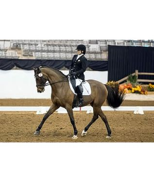 Hart and Shoemaker Dazzle during Freestyle to Win USEF Para-Dressage National Titles