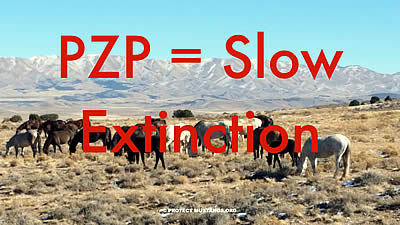PZP Pushers Are Misleading the Public as There Is No Evidence of Overpopulation