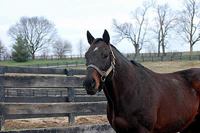 Belmont Stakes Winner Touch Gold Retired to Old Friends