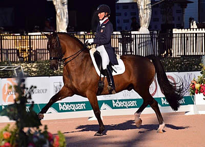 FEI Approves Tota Comfort System for International Competition