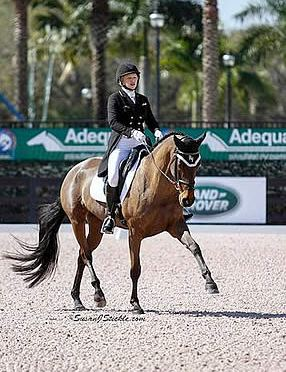 PBIEC to Host 2016 Asheville Regional Airport Wellington Eventing Showcase on February 5-6