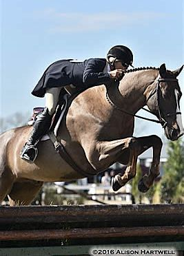 Shepherd Pulls Hat Trick in $10,000 USHJA International Hunter Derby