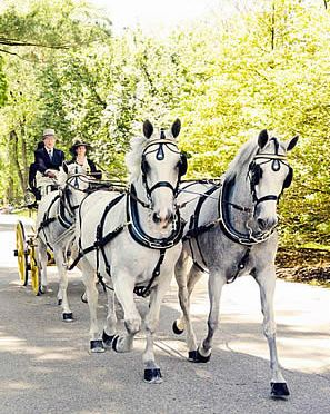Tradition Continues at Devon Horse Show and Country Fair with 50th Carriage Pleasure Drive
