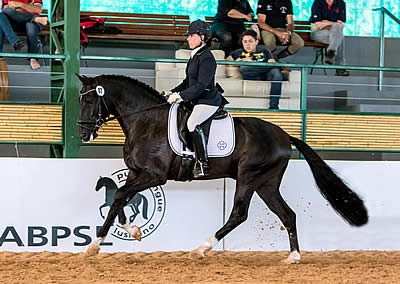 Interagro Lusitanos Capture Top Honors at Sao Paulo CDI-3*