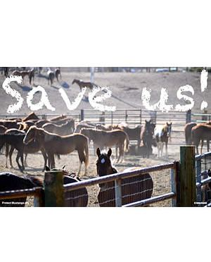 File a Complaint against Nazi-Like Population Control Experiments on America's Wild Horses!