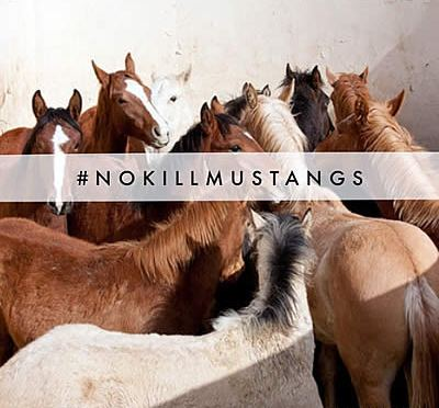 Protect Mustangs Calls for Nationwide Protests against Killing and Sterilizing Wild Horses and Burro