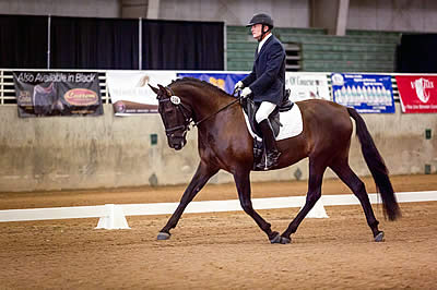 Andalusian Gelding Earns the Highest Score of the 2016 IALHA National Championship