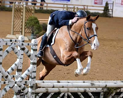 Championship Titles Awarded to Top Contenders at Stonewall Country Horse Show I