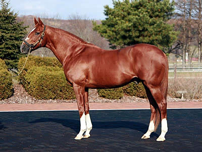 Horse of the Year Charismatic Dead at 20