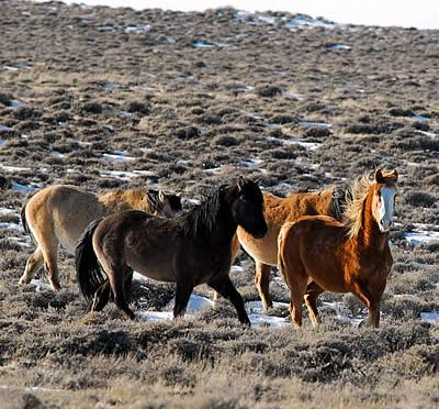 The High Price of Protecting Our Wild Horse Herds