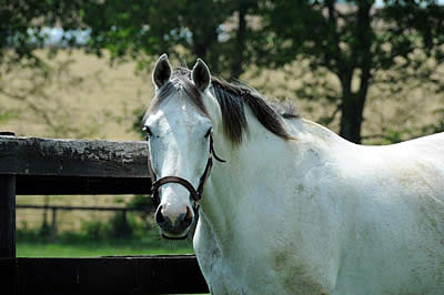 Diamond Stripes Passes Away at Old Friends