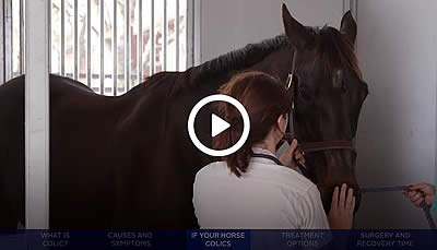 Colic: Signs, Symptoms, and First Aid with Hagyard's Dr. Liz Barrett