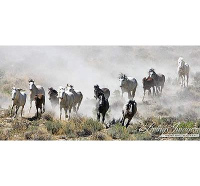 BLM Plans to Destroy and Slaughter Three Herds of Wild Horses in the Wyoming Checkerboard