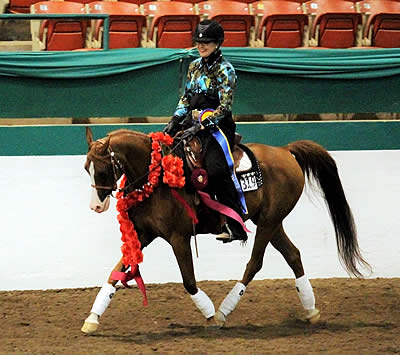 First Western Dressage National Champion Honored at Arabian Sport Horse Nationals